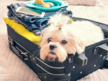 Evcil Hayvanınız Sizinle Mi Seyahat Ediyor?